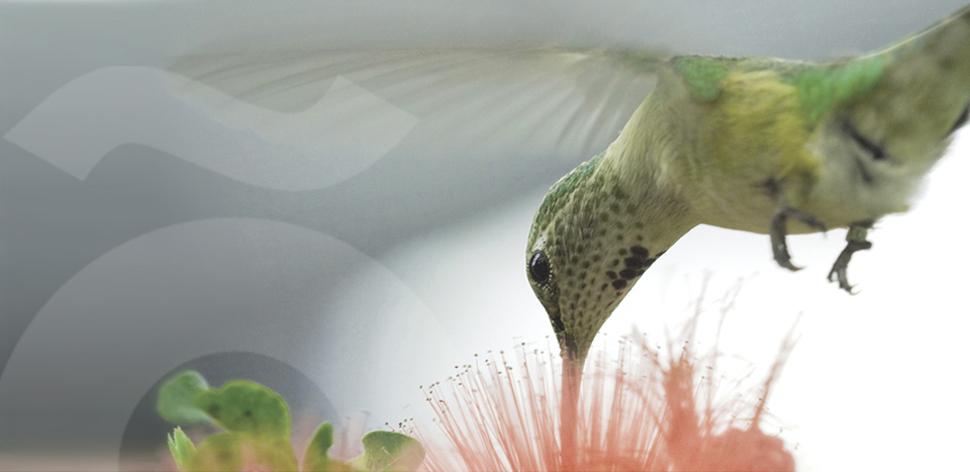 slider-colibri-2