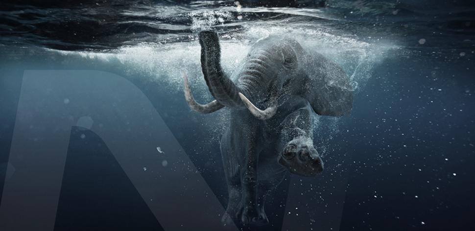 slider-elefante-2